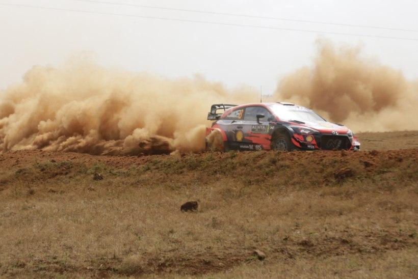 BLOGI | Ogier võitis Safari ralli, Tänak punktikatse