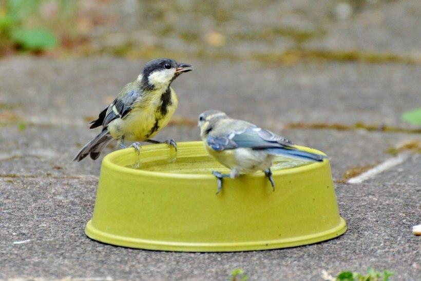 Kuuma suve aianipid, mis pakuvad leevendust taimedele ja lindudele-loomadele
