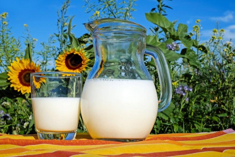 TOIDUTEADLANE SOOVITAB: nende omaduste tõttu on piim eriti väärtuslik toit!