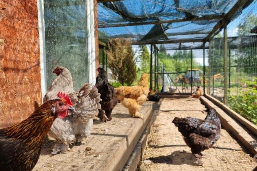 LINNAKANAD   Millega peab arvestama kanade rentimisel?