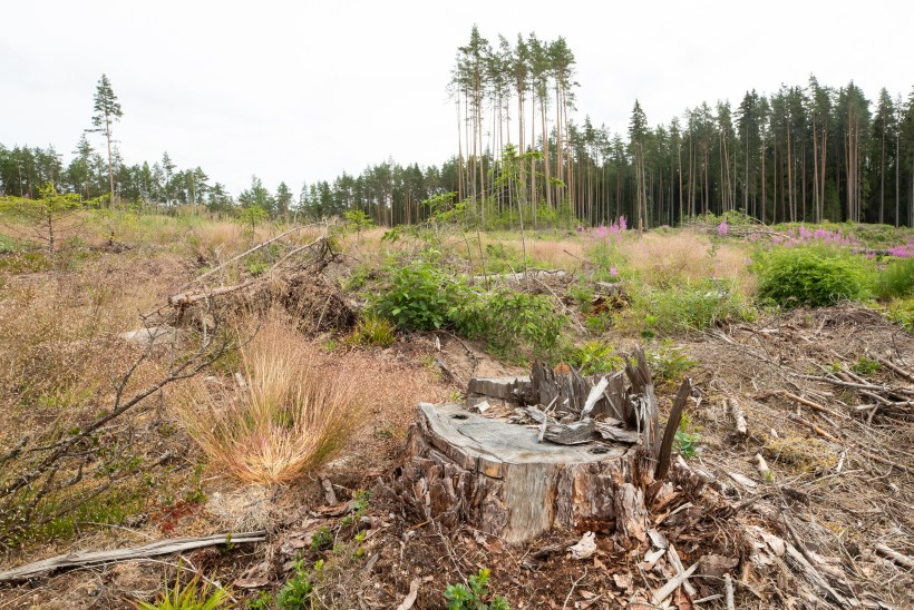 KESKKONNAAGENTUURI VASTUS ÕHTULEHE METSALOOLE: riik asub metsastatistika koostamist jõulisemalt täiustama