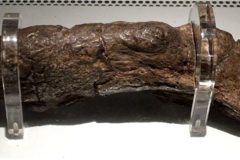 Ajaloo suurim kakajunn on 20 cm pikk ning sama väärtuslik kui Briti monarhide juveelid
