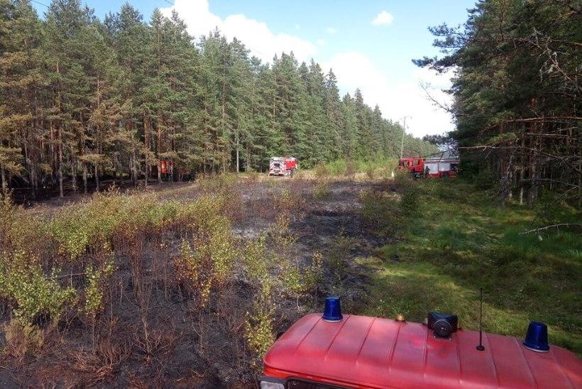 FOTOD | Harjumaal Vikipalu külas süttis katkisest kõrgepingeliinist metsaalune