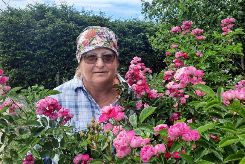 Pärast aju aneurüsmist taastumist põneva hobi leidnud Silva: roosid mind elus hoiavadki