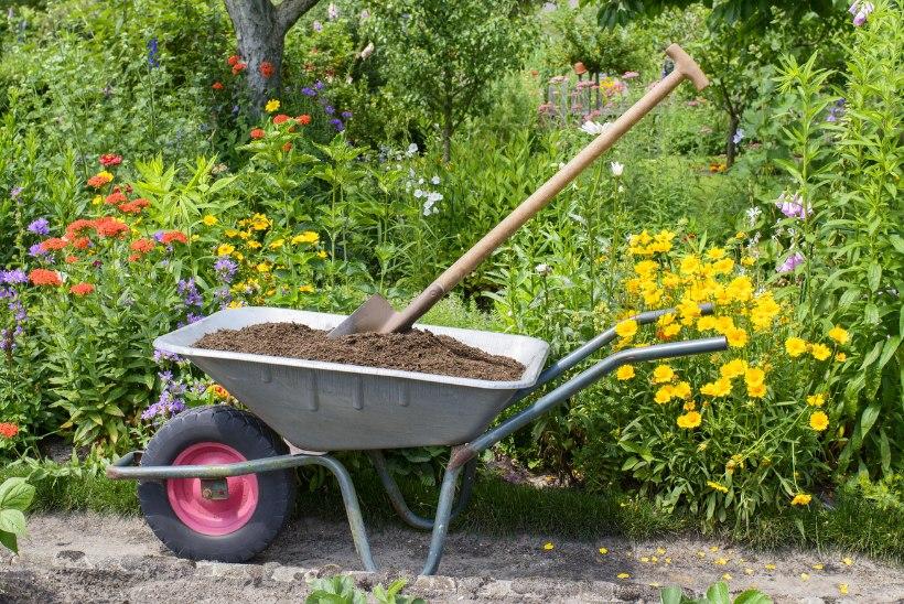 Muld ei ole lihtsalt muld! Teeme kindlaks, kuidas määrata aia mullakoostist ja leida sinna sobivad taimed