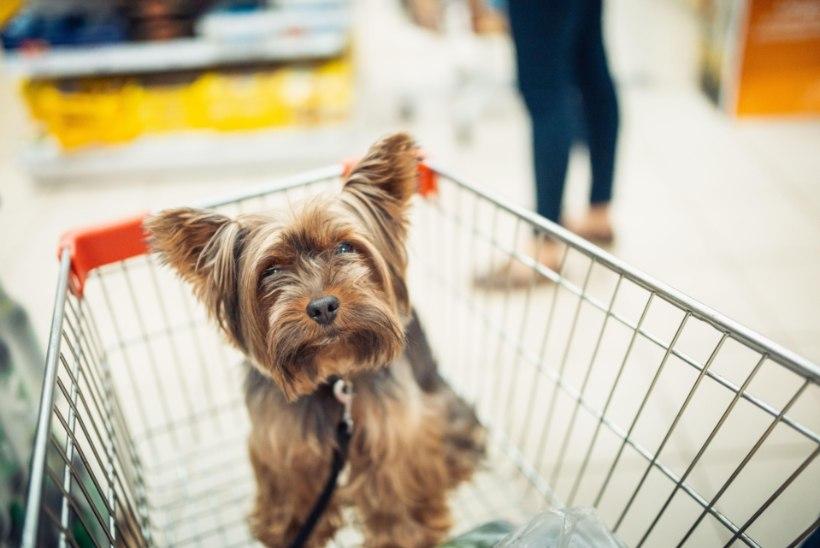 """KOERAGA TOIDUPOODI? """"Kauplus ei ole lemmikloomale sobiv keskkond."""""""