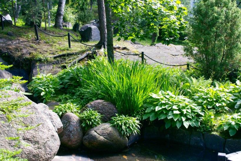 IDEID AEDA | Kujundame rohelisega ehk Ilu loovad dekoratiivsed taimed ja tekstuurid