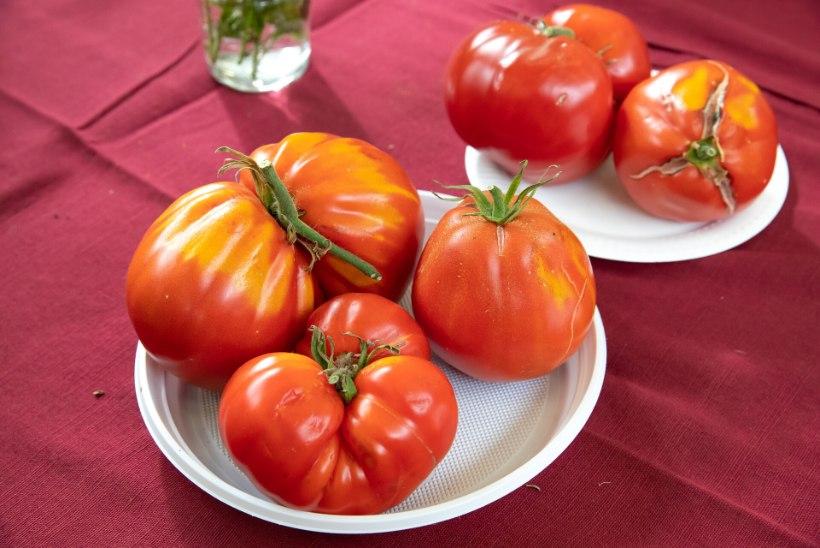 HEA TEADA: 7 põhjust, miks küpsetest tomatitest isu täis süüa