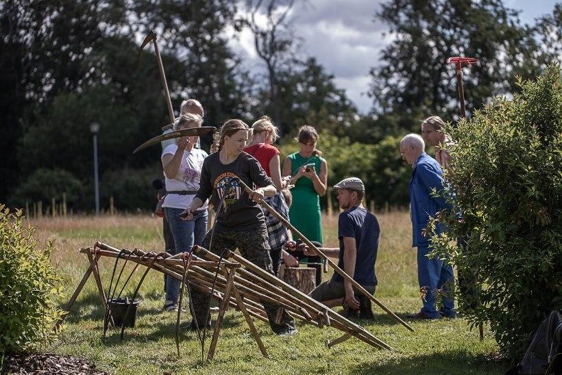 Tallinna Botaanikaaias treenitakse vikatiga niitmist ja niidutaimede tundmist