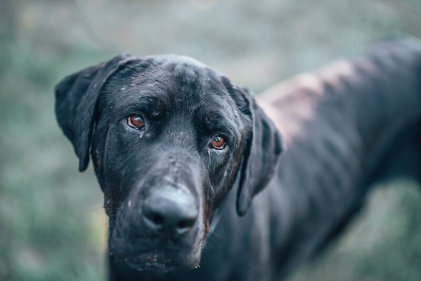 PÄÄSTETUD! 27 koera elasid kohutavates tingimustes