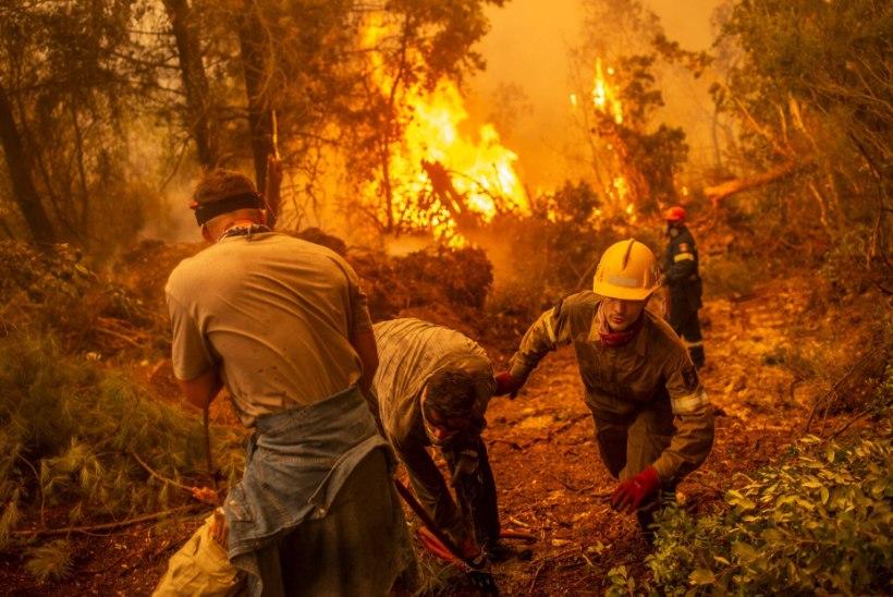 SUUREMAD TULEMÖLLUD: Euroopat räsivad metsatulekahjud jäävad ulatuselt Siberi ja Austraalia hiidpõlengutele selgelt alla
