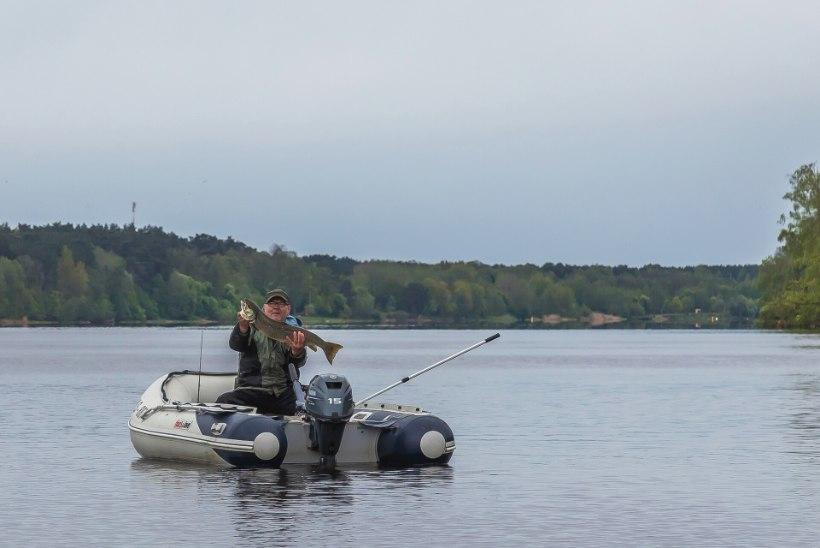 Pärnu jõgi pulbitseb taas elust ja kaladest