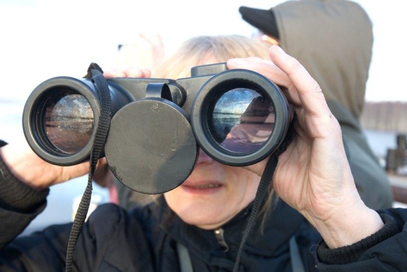 Avasta enda jaoks uus hobi: hakka loodusvaatlejaks!
