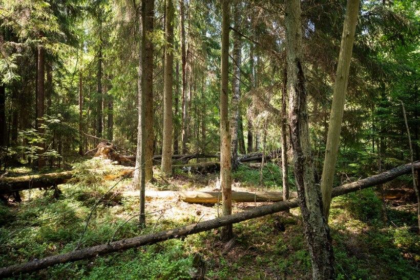 Lugeja küsib: millisel juhul saab maaomanik oma metsamaadel võõraste liikumist keelata?
