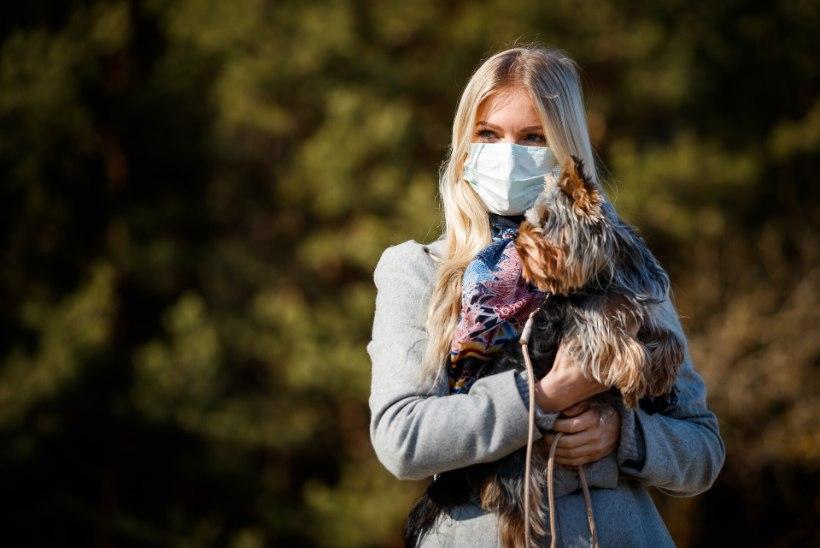 TEADLANE SELGITAB: missugune on maski tervist kahjustav mõju, eriti kui kanda seda pikka aega?