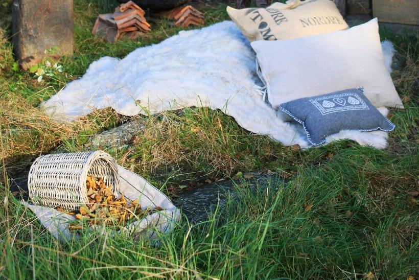 Vahva idee: korralda seenepidu!