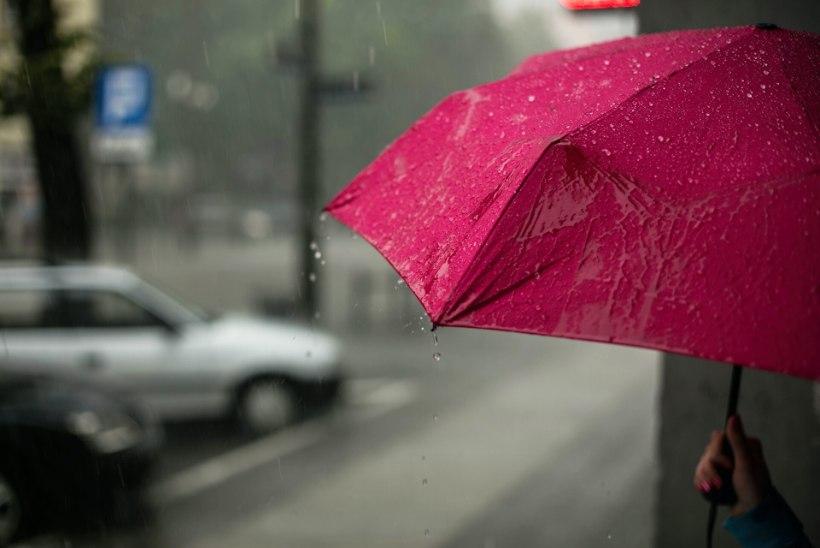 Naistelehe kodunupud: hoolda vihmavarju õigesti ja saa loomakarvadest vabaks kummikinnastega