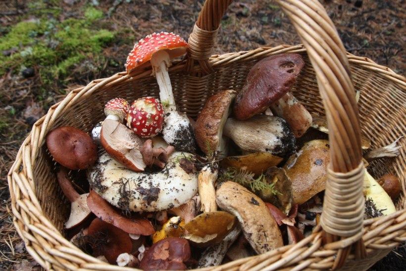 SEPTEMBRI MÄRKSÕNAD: mis vahe on tsukiinil ja baklažaanil, milliseid seeneäppe kasutada ja kui suur osa rahvastikust on kellegi vanavanemad?