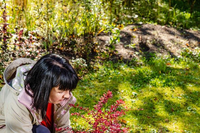 Värvid aiavaasis – kuidas teha värvirikas sügisene istutus
