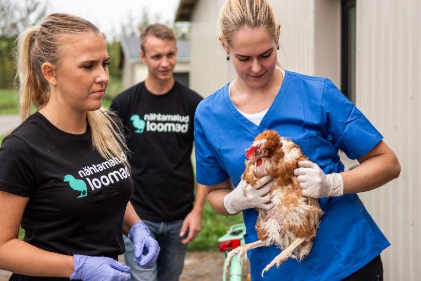 GALERII | Loomakaitsjad päästsid Eesti ühest suurimast puurikanalast hukkamisest 176 halvas seisus lindu