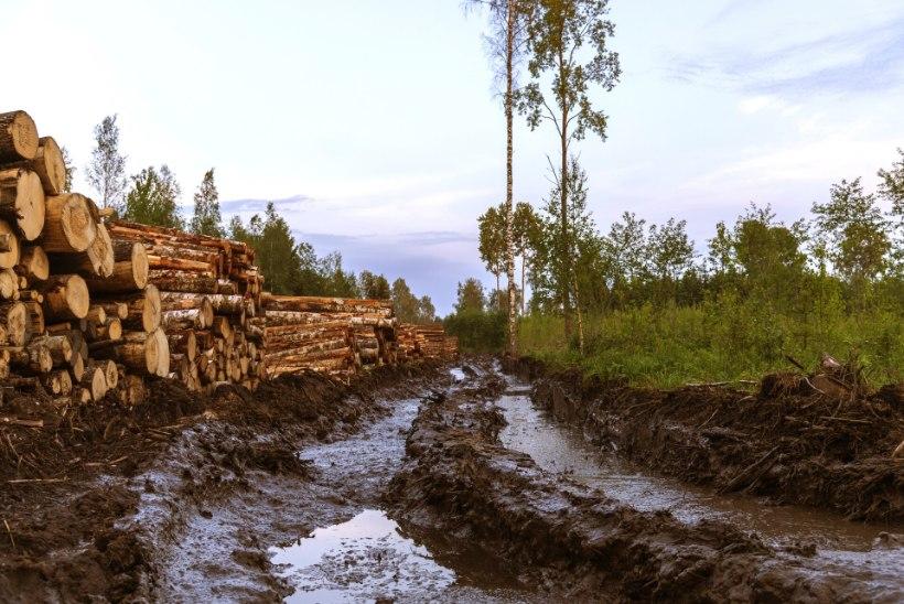 INFOMÜLGAS! Keskkonnasõbrad nõuavad riigi käest metsaandmeid kohtu kaudu