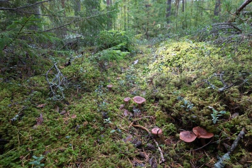 Jätkame Eesti Metsa fotokonkursiga!