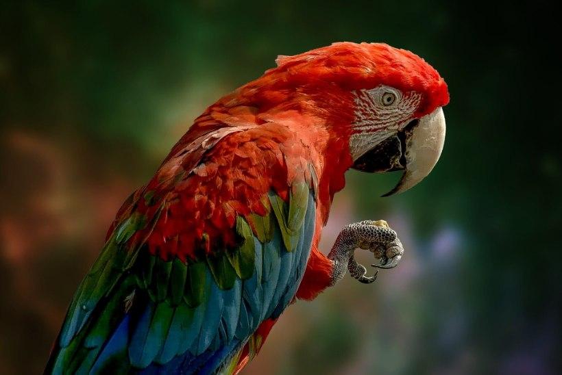 JUHTKIRI   Kas papagoid tulevad?
