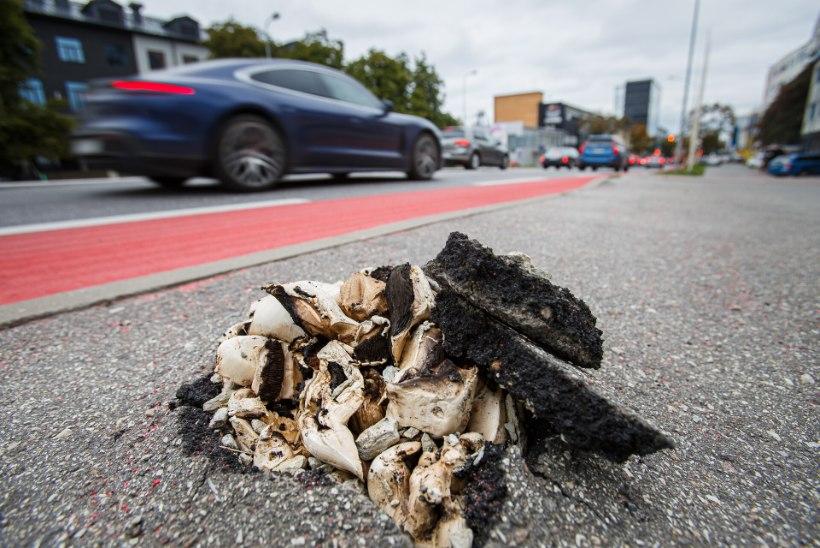 LOODUSE VÄGI! Linlasi hämmastavad seened, mis suudavad end asfaldist läbi suruda