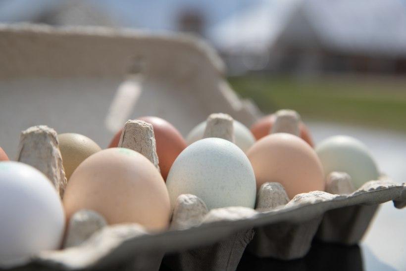 Lugejakiri   Kas sina avad ja kontrollid, mis on munakarbi sees?!