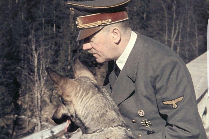 NATSIDEST LOOMAARMASTAJAD: Hitlerile pakkus rõõmu saksa lambakoer Blondi, Göring kasvatas lõvikutsikaid