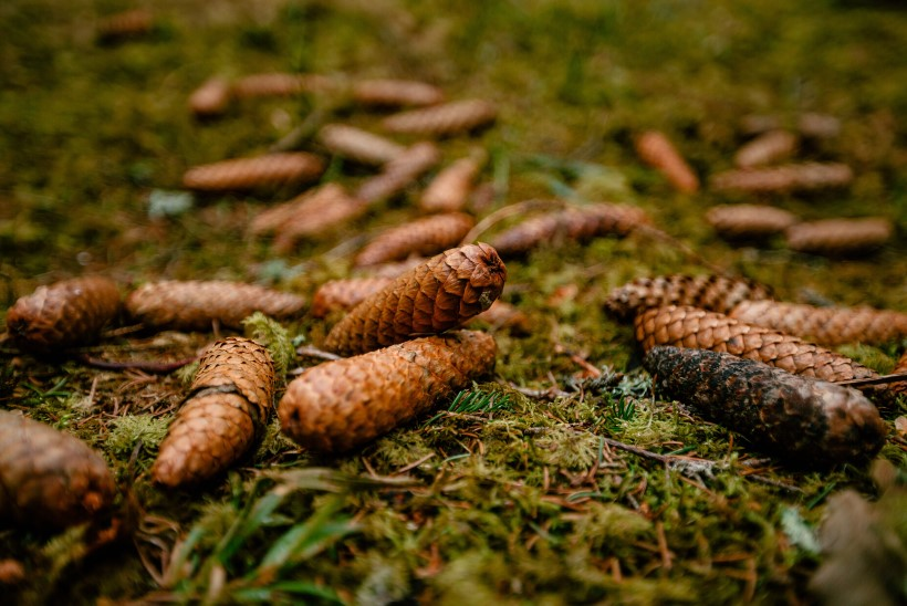 NUTIKAS NIPP | Kui puid ei ole, aga grillida tahaks