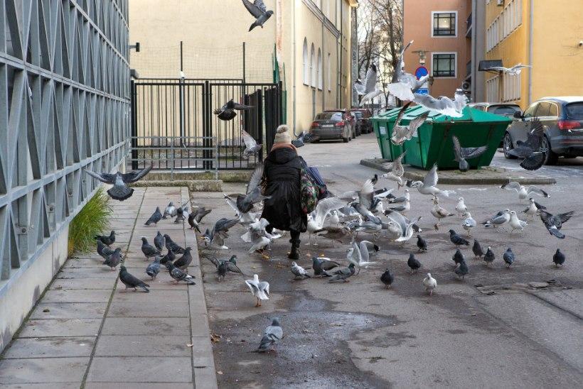 MUPO HOIATAB: kui eakad lindude toitmist ei lõpeta, võib neid oodata kuni 9600eurone trahv