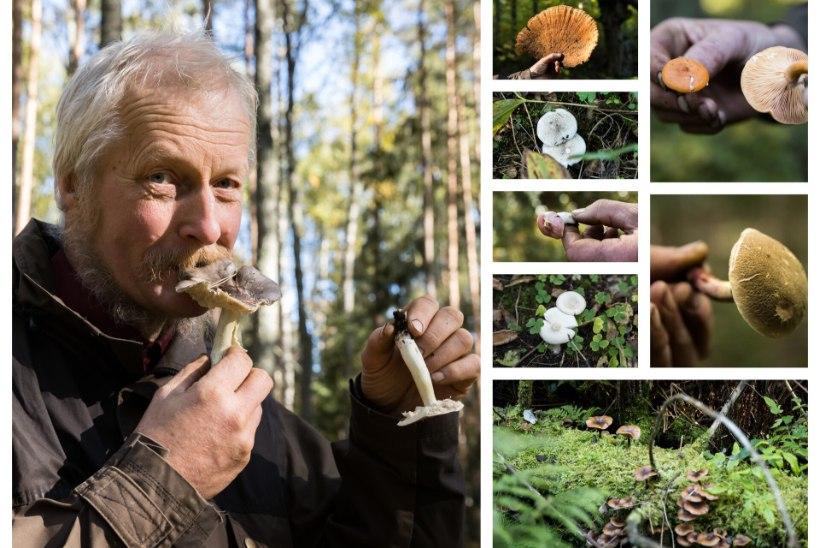 GALERII | UUS SEENELAINE! Bioloog Tõnu Ploompuu määrab sügava sügise vähetuntud seeni: mis viib keele alla, mis aga mullatoidule