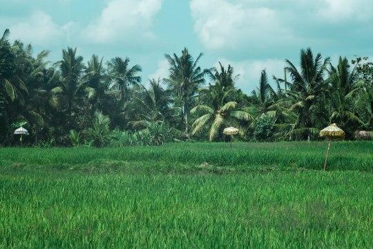 Indoneesia blogi: kohtumine eestlastega