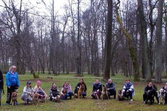 Koeraomanik: Tartus pole ühtegi koerajalutusaedikut