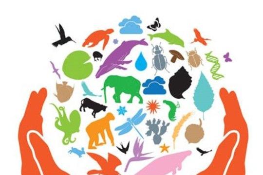 22. MAI: Ülemaailmne biolooglise mitmekesisuse päev