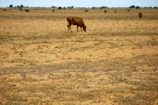 Etioopias on põud põhjustanud suure rahvasterände