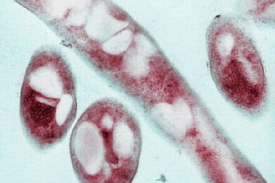 Soojenev kliima paneb haigused vohama