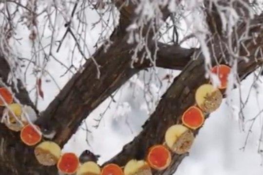 Tee tore talvine linnusöötja