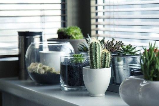 5 head nippi, kuidas toataimedega kodu kaunistada