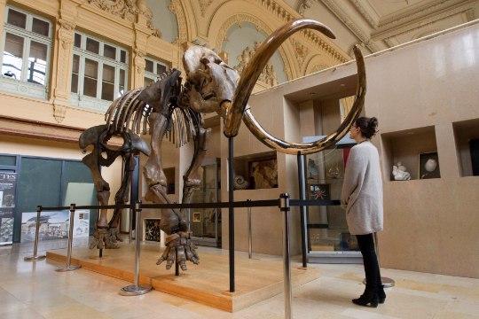 Haruldane mammutiskelett müüdi enam kui 500 000 euro eest