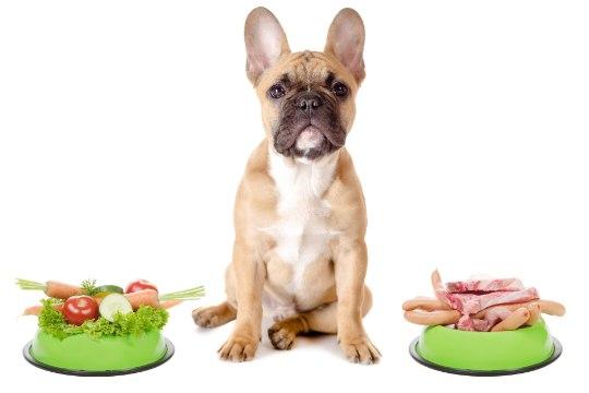 Sul on ülekaaluline KOER? Tee lemmikuga trenni ja pane ta dieedile!