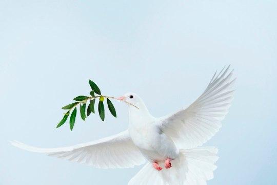 Globaalne rahuindeks 2017: rahutase maailmas tõusis 0,28%