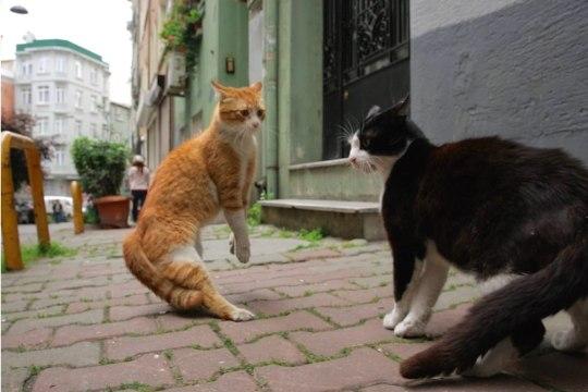 """""""Kedi"""" – ilus ja südamlik lugu kütkestavatest tänavakassidest"""