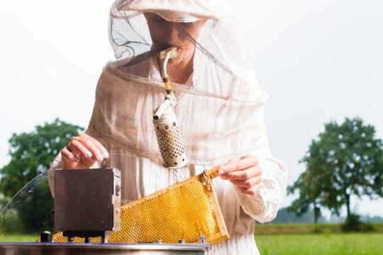 MESIKÄPPADELE: mesise nektari jõud