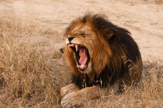 Kaheksa metsikut looma, kes sind rünnata võivad - ja kuidas rünnakus ellu jääda