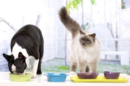 Ученые рассказали, почему собаки и кошки не должны есть сырое мясо