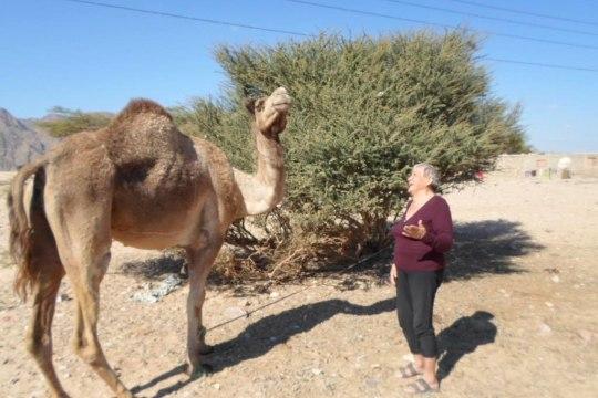 """Egiptuses talvituv eesti pensionär täitis oma unistuse ja ostis kaameli: """"Õnneks ta ei kippunud mind hammustama!"""""""