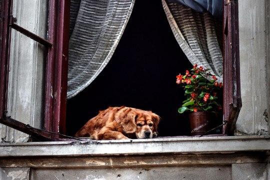 LEMMIK | Koerale kuuti valides ära unusta patju, tekke ja akent