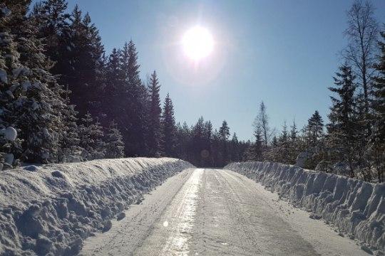 Rootsis on seekord lund metsikult. Kas Tänak võtab Latvalalt revanši?